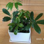 3コインズ 観葉植物